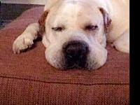 Otis *Courtesy Post*'s story Otis is Shar Pei mix,