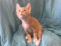 OTIS's story Hi! My name is Otis and I am a sweet and