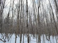 Off grid but not too far out there. This 41 acre lot is