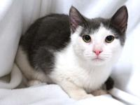 Meet Otis!  Otis is a 4 month old male kitten who was
