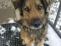 Otto is a two year old collie Shepard mix. he was an