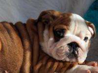 http://foreverbulldogs.tripod.com/. This little man has