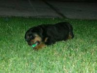 I have a female rottweiler with full akc please feel