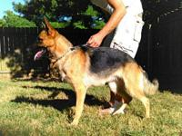 Due to arrive mid October. Sire: Rex Von Batu Athens /