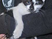 Owen's story Meet Owen! He is a handsome 8 week old,