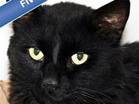 Ozzy's story This cat has tested FIV positive and is