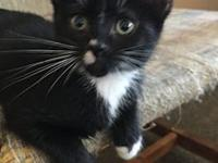 OZZY's story ***THIS KITTY WILL NOT BE AVAILABLE FOR