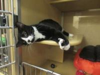 P. J. *Petsmart GB*'s story 1 years old Domestic