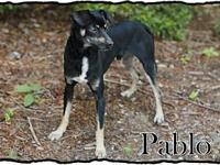 Pablo's story ADOPTION APPLICTAION: