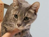Pac Man's story Pac Man is handsome neutered boy who is
