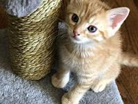 Pac-Man's story Pac-Man is a playful, male Tabby kitten
