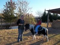 Gorgeous Miniature horses, 3 Black and white paint
