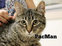PacMan's story The adoption fee is $85.00 with an