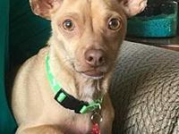 Paco's story Meet Paco! This cutie is a neutered 3 year
