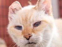 Pad Thai is a super-sweet and affectionate senior cat