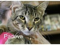 Padova's story The adoption fee is $85.00 with an