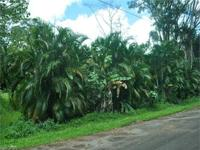 Excellent opportunity to buy a better lot in Kalapana