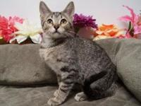 Paige (C18-226)'s story Paige is a spunky, brown, Tabby
