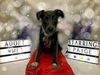 Paige's story You can fill out an adoption application