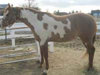 Miss Donna Lynn. Lilia is a five year old paint horse