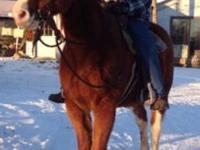 Paint/Pinto - Deuce - Large - Adult - Male - Horse
