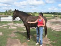Paint/Pinto - Lena - Medium - Adult - Female - Horse 5