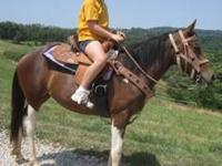 Paint/Pinto - Mariah - Medium - Young - Female - Horse