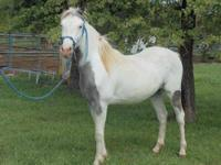 Paint/Pinto - Rowdy - Medium - Young - Male - Horse