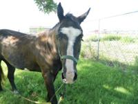 Paint/Pinto - Starlight - Large - Adult - Female -