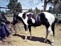 Wonderful stallion needs mares... call  Owners age and