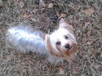 I have a CKC Reg female Yorki. She is around 5 #'s. She