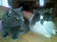 Pair of Cutie Cats Seek Loving Home Together in Las