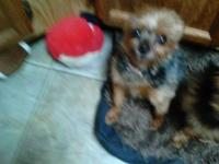 I have to female yorkies up for adoption, the are both