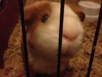 I have a great pair of guinea pigs that are looking for