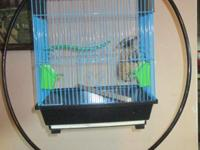 Beautiful pair of Zebra Finches, W cage, stand, nest ,