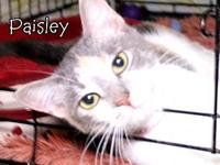 Paisley's story Paisley has tested positive for