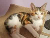 Paisley18's story All Purr Partners Adoptable Cats