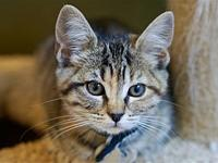 Paisley's story I am a playful kitten who loves to