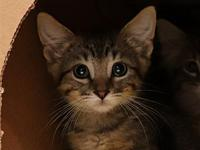 Pal's story Pal is a sweet kitten who is looking for