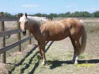 21 yr old Palamino Mare for sale, would make a great