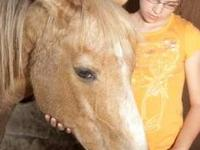 Palomino - Fella - Medium - Young - Male - Horse Fella