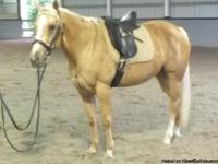 Beautiful 7 yr old Mare, golden coat with chrome mane