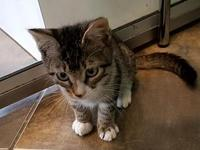 Pam's story I'm a playful kitten looking for the
