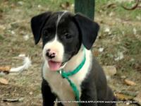 PANDA's story ADOPTION INFORMATION IS LOCATED ON OUR