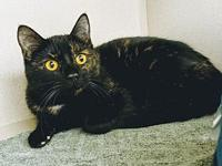 My story Tortie alert!! This gorgeous girl is Pandora