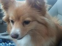 Pandy's story Pandy is a 2 year old Pom mix. Her mom is