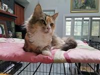 Pansy's story Pansy is about 2 years old, beautiful and