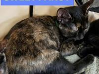 Pansy's story Little Pansy is one of five tortie girls