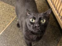 Pantera is a sweet, active, playful feline whos also