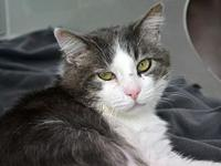 Papa Kitty *Special Adoption Fee's story I have a